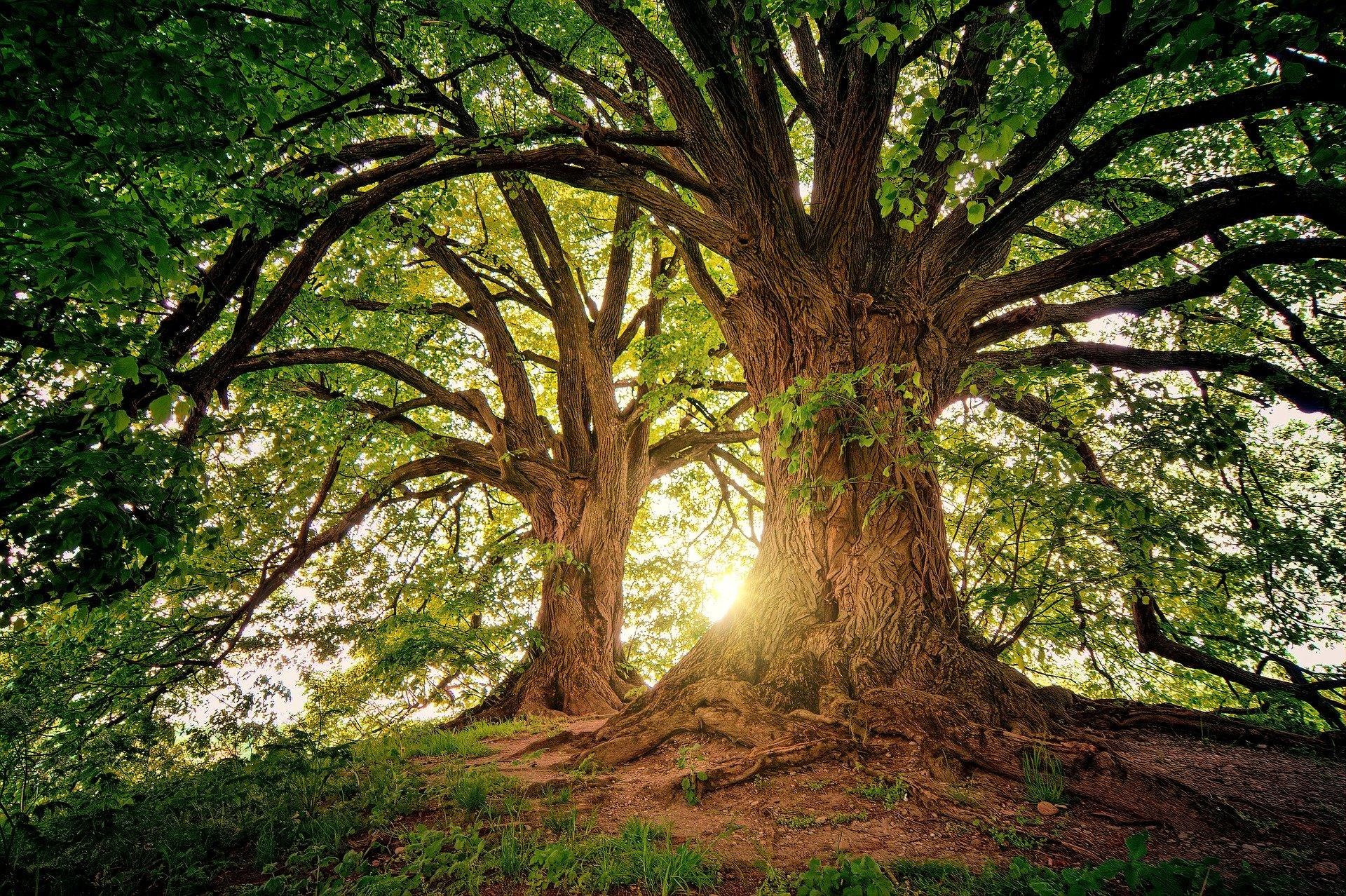 The Stories Behind the Trees: The European Tree of the Year Awards 2020 |  Lantra Awards