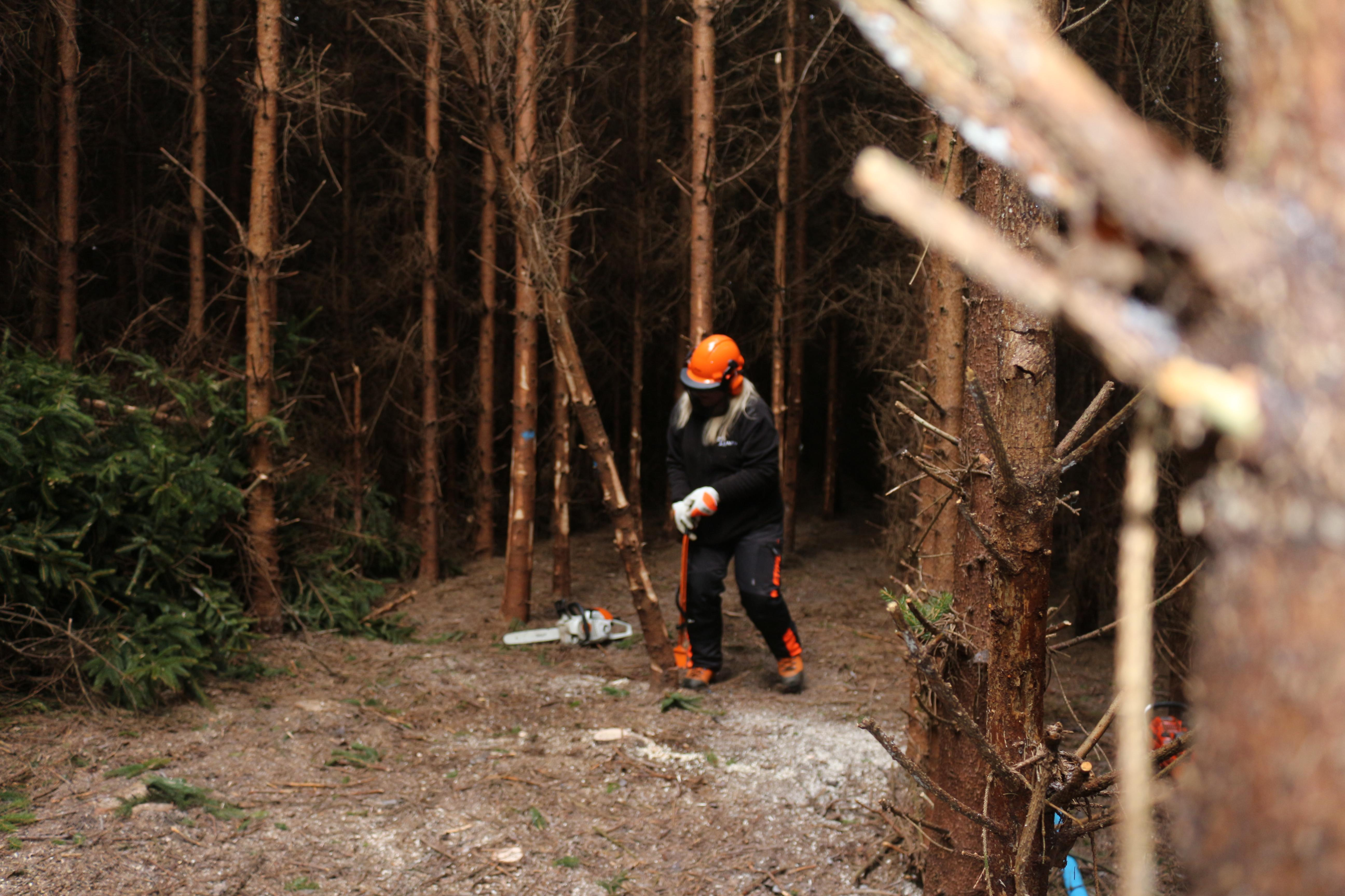 Forester Felling Tree